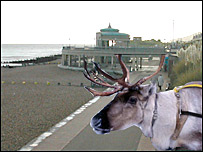 A reindeer on Eastbourne seafront