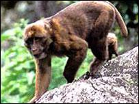 Nuevo mono en India