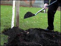 Tree planting (generic)