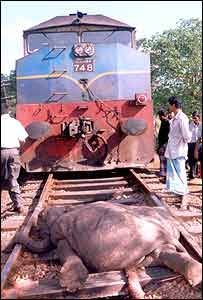 Dead elephant in front of train