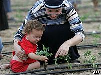 Jewish settlers plant crops in Netzarim settlement