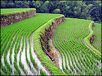 Paddy field, PA