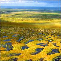 Tundra in Siberia, AP