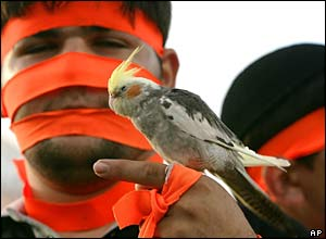 Israeli youth with face wrapped in orange ribbon holding bird