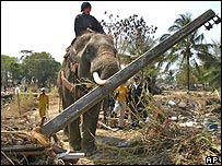 Elephants being used to clear debris in Thailand