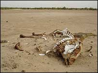 Animal carcass