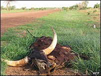 Dead animal in Niger