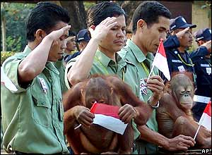 Two orang-utans attend a ceremony of Indonesia's independence at Taman Safari Prigen wildlife sanctuary in Pasuruan, 17 August 2005.