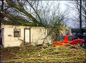 Tree on mobile home in Dromore, County Down, Northern Ireland