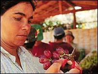 Brazilian farmer