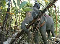 Elephant clears debris