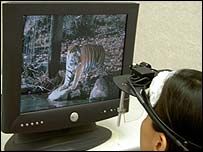 Student looking at a picture of a tiger during experiment