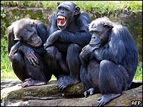 Tres chimpancs