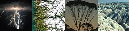 Naturaleza fractal: rayos, r�os, �rboles, cadenas monta�osas... (Fotos: gentileza Universidad de Yale)