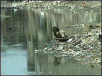 An Indian boy rummages through rubbish on a river bank