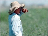 Inmigrante en un sembradío en Estados Unidos.