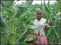 Girl in maize field with basket of herbs