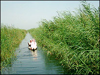 Small boat on a dyke (Image courtesy Jassim Al-Asadi, Centre for the Restoration of Iraqi Marshlands/Unep)