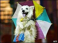 Dog performing at a circus