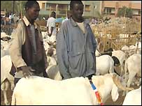 Sheep traders in Dakar, Senegal