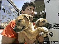 An animal welfare volunteer carrier dogs out of a Gaza settlement