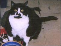 Mischief the cat in fatter days
