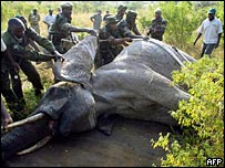 KWS gamekeepers surround an elephant that is being moved from one park to another