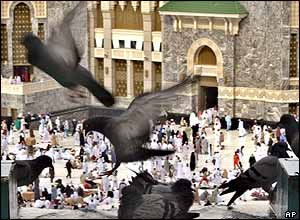 Pigeons at the Grand Mosque in Mecca