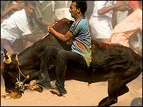 Bullfighting in Tamil Nadu