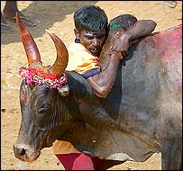Bullfighter in Tamil Nadu