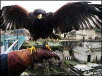 A Harris hawk perches on the hand of his falconer in the Herculaneum archaeological site near Pompeii and Naples