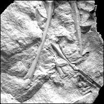 Fossil bones, Julia Clarke