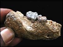 Ardipithecus ramidus jaw fragment, Image: Sileshi Semaw