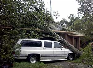 Fallen tree in Lacombe, Louisiana