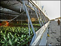 A greenhouse in the southern Gaza Strip