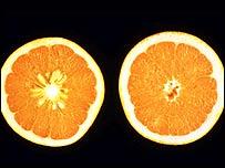 Oranges, USDA