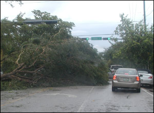 Kevin Harland's picture of damage in Coconut Grove