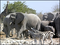 Elephants, zebra and a giraffe in a Namibian nature reserve, BBC