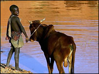 In Niger, a boy leads cattle to water, Getty