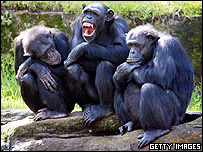 Common chimpanzees, Getty Images