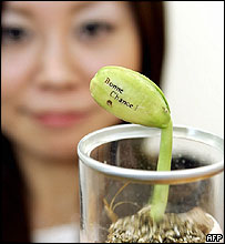 Japan's toy maker Tomy employee displays a bean plant with message in French