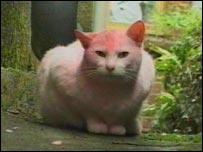 Brumas the pink cat