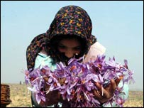 Kashmiri woman with saffron flowers