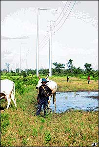 A Chadian cowherd stands beneath an Exxon Mobil power line