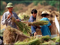 Vietnamese farmers harvest rice.  AP