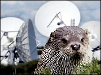 Otter and satellite dishes