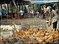 Inspection of chickens in northern Vietnam market