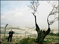 Palestinian landowner Johnny Atik stands next to a dead olive tree in front of Israel's separation fence