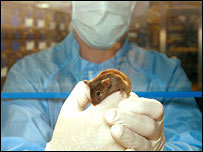 A lab mouse on a glove (BBC)