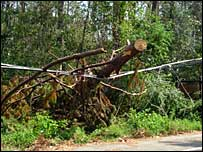 Tree downed by Hurricane Katrina